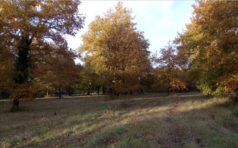 Vente Terrain GRAYAN ET L HOPITAL (33590) - 768 m² -