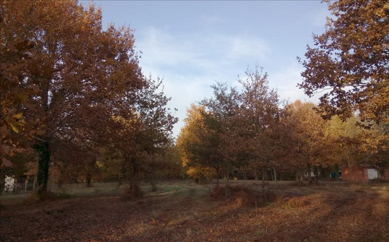 Vente Terrain GRAYAN ET L HOPITAL (33590) - 3300 m² -