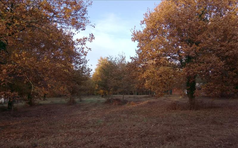 Vente Terrain GRAYAN ET L HOPITAL (33590) - 2350 m² -